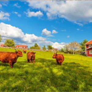 Att göra i Småland