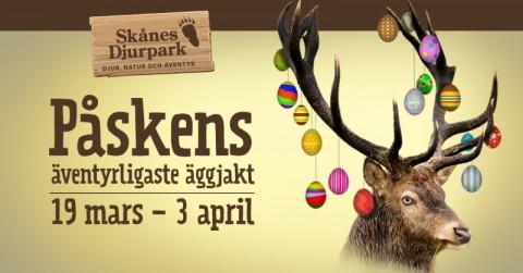 Äventyrlig äggjakt på Skånes Djurpark