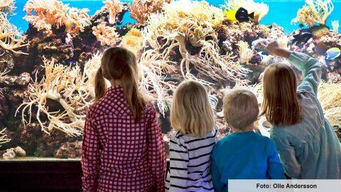 Rekordår för Sjöfartsmuseet Akvariet